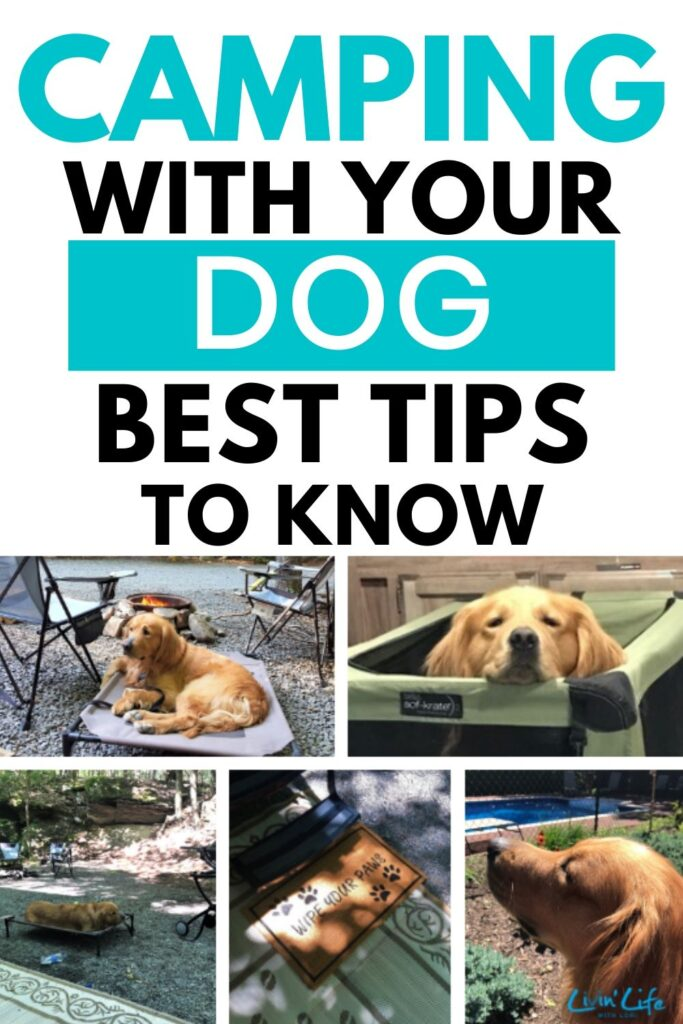 tips for camping with dog