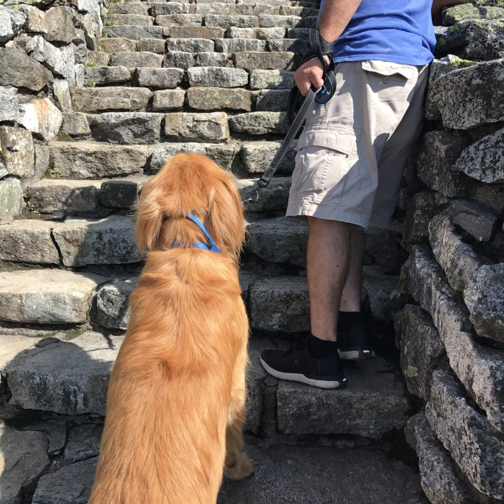 Buddy Begins The Stairway Ridge Trail