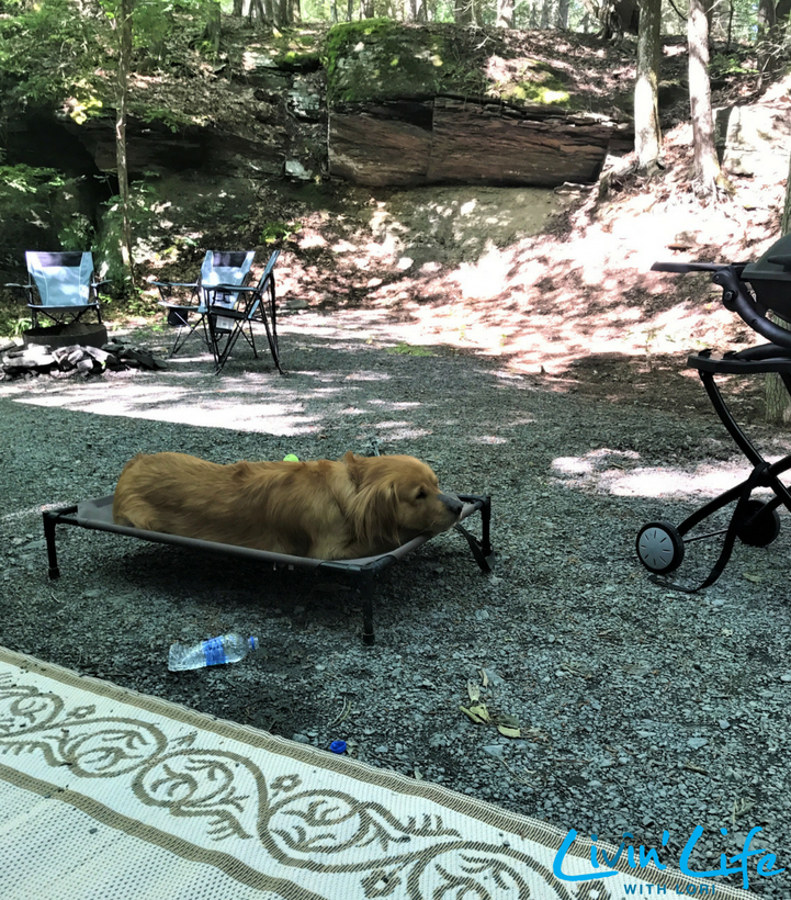 Buddy's New Camping Bed