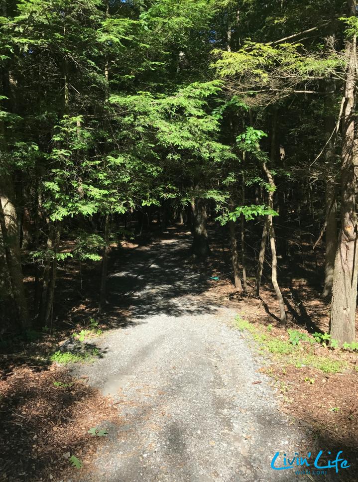 Trails at Rip Van Winkle