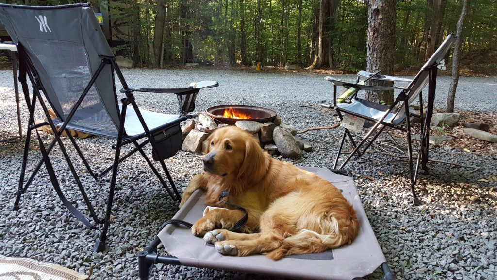 Buddy at Campsite using his dog bed