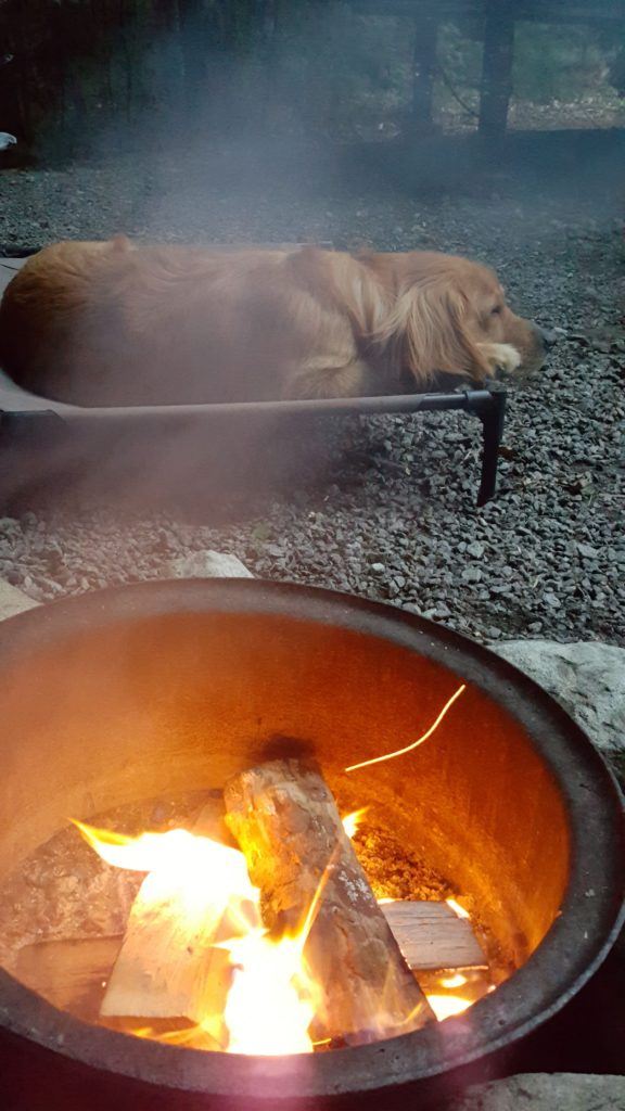 golden retriever by campfire at North Pole Resorts