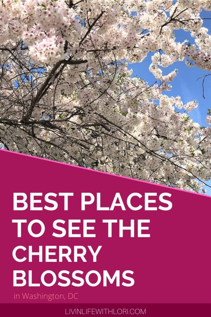Where To See The Cherry Blossoms in Washington DC