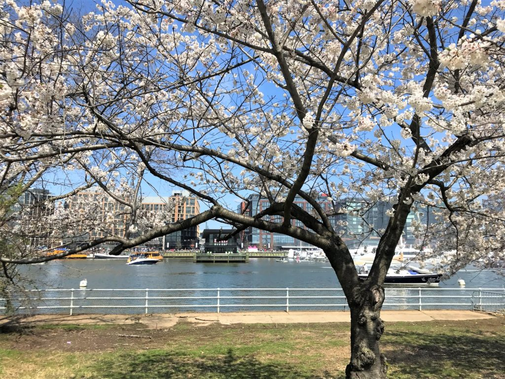 View of the Wharf where the Cherry Blossom Festival is held