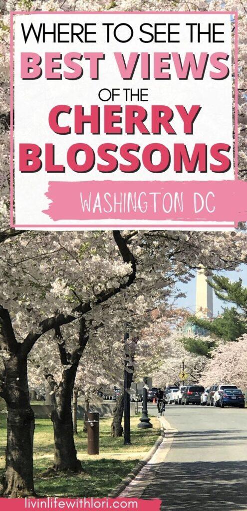 Cherry Blossom Tress Washington DC
