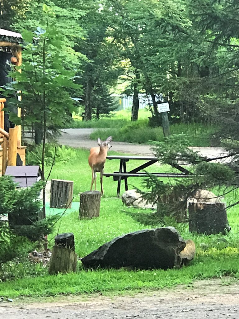 Wildlife at Old Forge Camping Resort