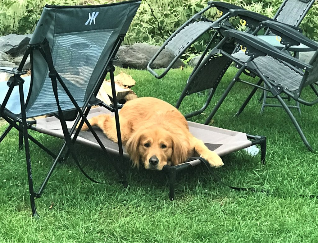 dog bed for camping