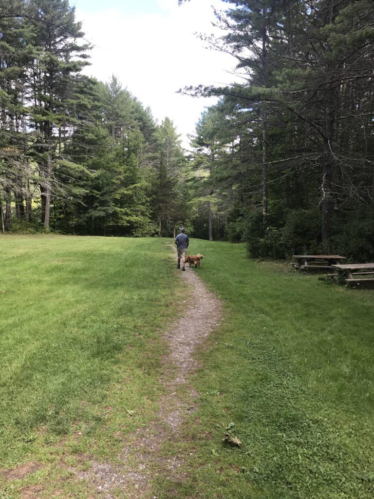 Golden Retriever hiking at Minekill State Park Overlook