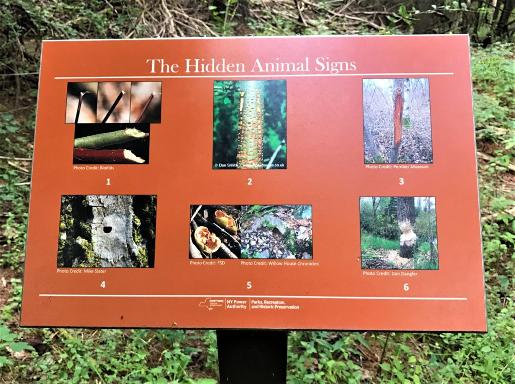 Hidden Animal Signs at Mine Kill State Park New York