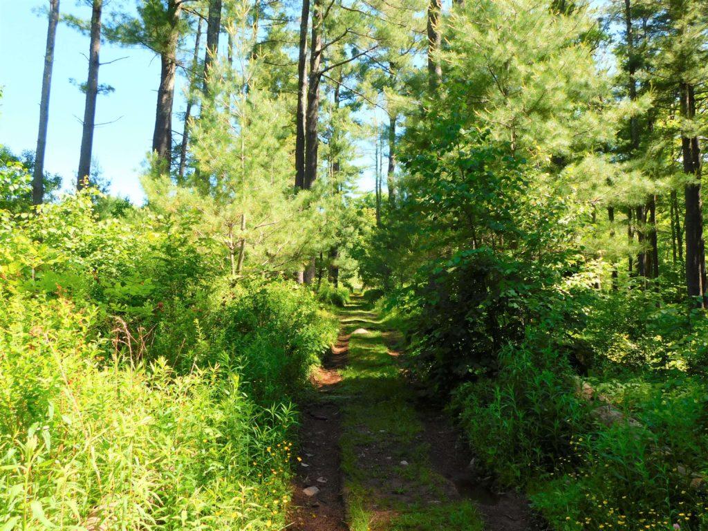 dog friendly trail at Mountaintop Arboretum