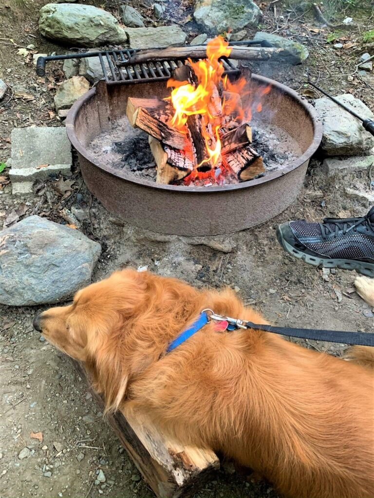 golden retriever by the campfire
