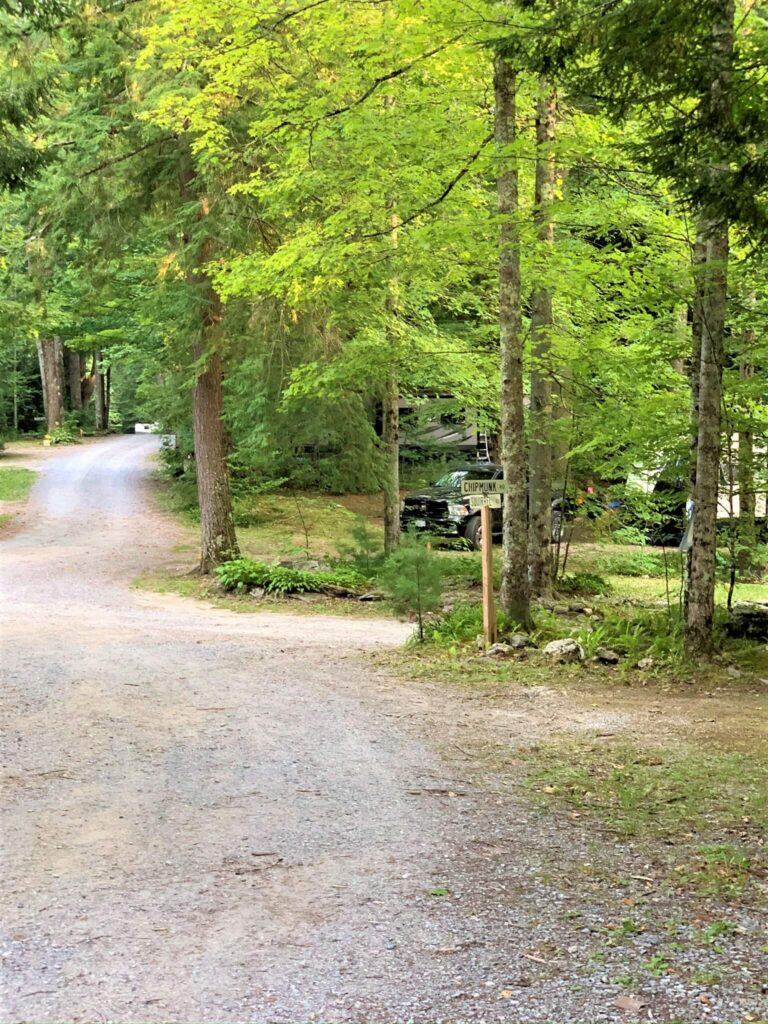 wooded campsites at Mt Greylock Campsite Park