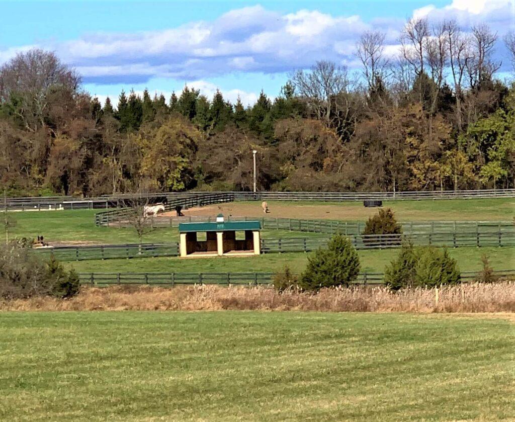 Equestrian Center Salamander Resort & Spa