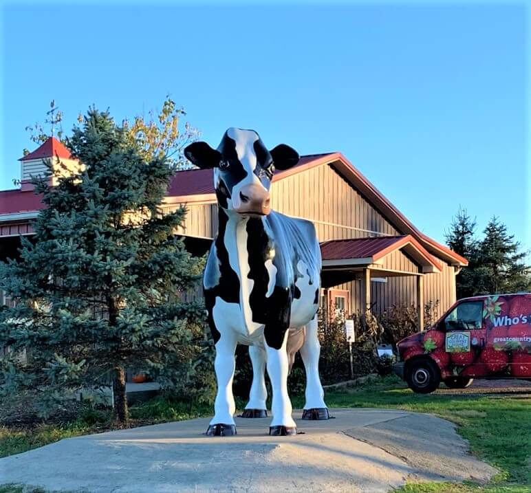 Cow at entrance to Great Country Farms