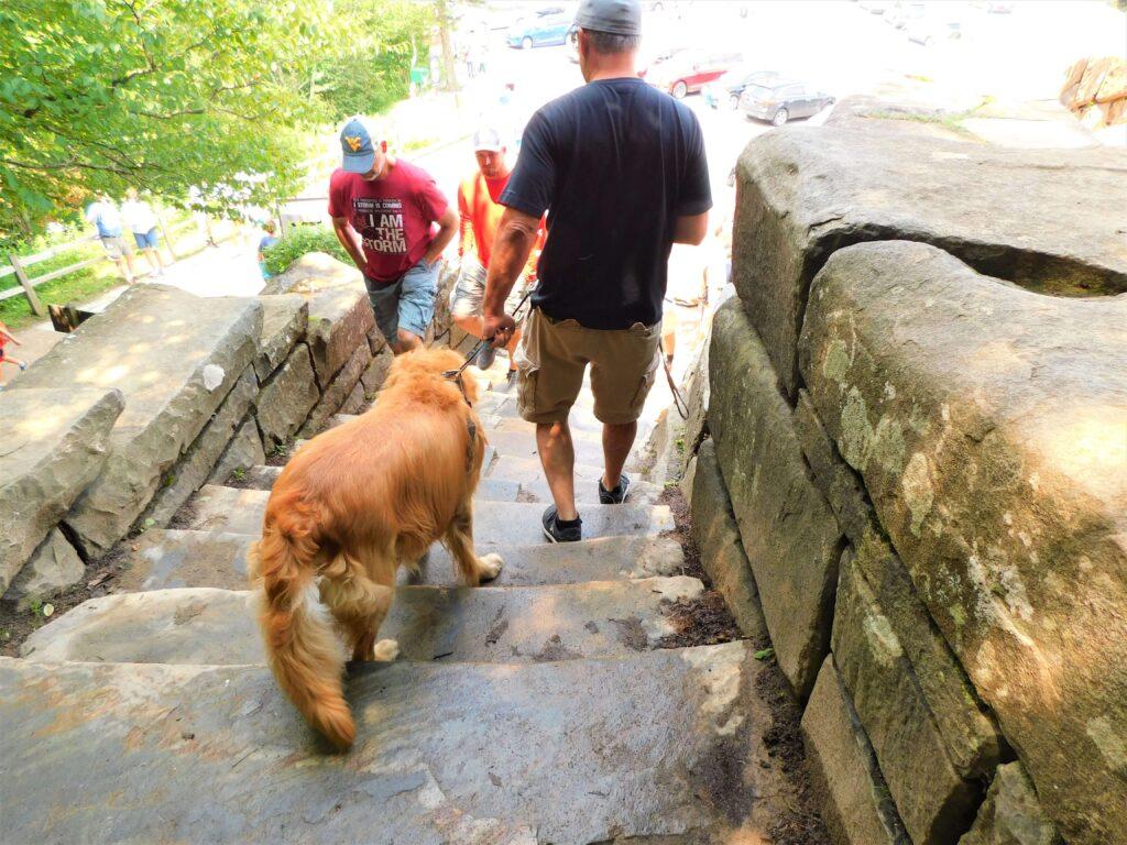Golden Retriever at Newfound Gap